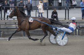 Jeg synes Darling Nikki er det beste bankerbudet i dag – og Lars Anvar Kolle er helt enig (foto: hesteguiden.com)