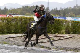 14 av 14 ganger har Kristine Kvasnes kunnet juble fra ryggen til Ulsrud Tea – blir det nok en triumf i V75-1 i dag? (foto: hesteguiden.com)