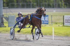 Artemis vant enkelt i norgesdebuten – blir det ny seier på Bjerke i kveld? (fotos: hesteguiden.com)