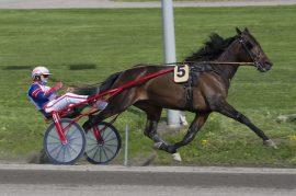 Kan virkelig denne hesten tape travløp da? (foto: hesteguiden.com)