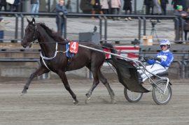 Vidar Hop er tilbake i sylkyen på B.B.S. Sugarlight – blir det kronet med seier i V75-6? (foto: hesteguiden.com)