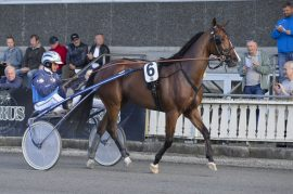 3-årige Outstanding O. og Frode Hamre kommer fra enkel V75-seier på Forus – blir det ny triumf i V76-1 onsdag kveld? (foto: hesteguiden.com)