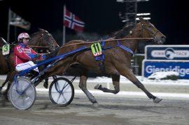 Sigbjørn Kolnes-trente Pingus Vang spurtet til V75-seier for Åsbjørn Tengsareid sist – ny triumf i V75-6 på Bjerke onsdag? (foto: hesteguiden.com)