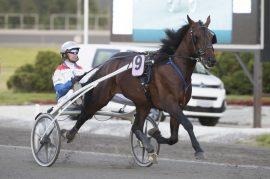 Jeg synes stilige Tiger Man E.P. skal ha en god sjanse til å runde alle i V76-2 i kveld (foto: hesteguiden.com)