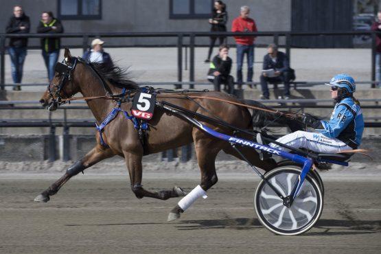 Seiersvillige Federal Crown og Ragnhild Bjørnbeth tar onsdag turen fra Trøndelag for å vinne løpet for stallansatte i V76-6 (foto: hesteguiden.com)