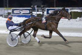 Seiersvante Exciting Chip har en god sjanse sammen med Olav Mikkelborg i V76-4 i kveld (foto: hesteguiden.com)