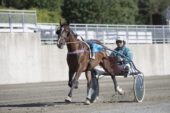 Sven Olav Weberg hadde Sober Sam i unghesttrening – her fra mønstringsløpet i 2016 (foto: hesteguiden.com)