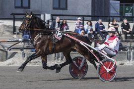 Hugo Bäck og Gøran Antonsen feilet seg bort i Kongepokalen sist – i V76-1 onsdag møter den lovende 4-åringen hester han slår alle dager i uka feilfritt (foto: hesteguiden.com)