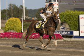 Strikkeprinsen gjør onsdag sin 10. start i montè – selvom  motstanden er bedre enn noengang blir  Håkon Jo-vallaken favoritt til å ta sin niende triumf under sal i V76-3 (foto: hesteguiden.com)