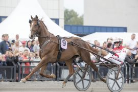 Smellvakre Lionel og Gøran Antonsen trakk et flott tredjespor i sitt Elitloppskval på Solvalla neste søndag (foto: hesteguiden.com)