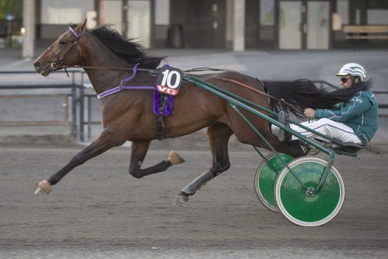 Sven Olav Weberg har en flott traver i L'Amour Bonanza som har vunnet halvparten av startene – økes seiersprosenten tross bakspor i V76-finalen på KLOSTERSKOGEN onsdag? (foto: hesteguiden.com)
