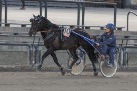 Valle Mattis har virkelig tent til i regi Heidi Moen og onsdag jakter åtteåringen årets syvende triumf i et herlig oppgjør i V76-finalen (foto: hesteguiden.com)