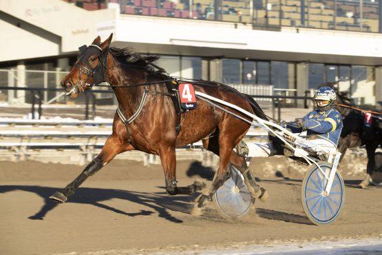 Anderssen-stallen gjorde det meget bra i fjor og har startet ditto i år – loser Kristian Malmin Luxury Tile inn til hennes tredje seier i 2019 i V75 Bonus-finalen på Bjerke onsdag? (foto: hesteguiden.com)