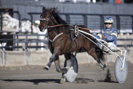 UBESEIRET: har Trond Anderssen-oppdrettet Orlando Classic stolpe i programmet etter V75-2 onsdag eller må Kristian Malmins oppsitt bite i grasset for første gang? (foto: hesteguiden.com)