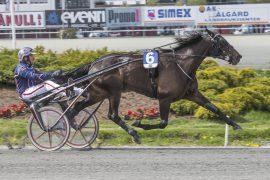 Muscle Hill-hoppa Hillary B.R. er ubeseiret på ti starter sammen med Magnus Teien Gundersen – mandag kveld skal svenskene få bryne seg på 4-åringen i V64-3 på Halmstad (foto: hesteguiden.com)