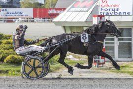 Kjetil Djøseland-trente Professor Ø.K. vant lett  sist det var V75 på hans hjemmebane – lørdag kjører Magnus T. Gundersen den kapable 5-åringen som blir storfavoritt i V75-3 (foto: hesteguiden.com)