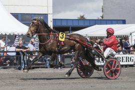Vertigo Dominant kommer fra Rogaland for å vinne V75-5 på Bjerke onsdag. Eier Håkon Steine overlater tømmene til sønnen Bjørn som vant overlegent med 5-åringen på ny rekord sist (foto: hesteguiden.com)