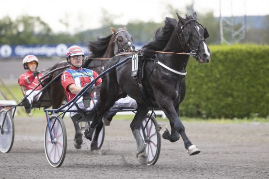 4-årige Aasvind imponerte da han første gang i amerikanervogn med sin trener Geir Flåten spurtet til seier på flotte 25.4 full vei sist – hvor fort sprinter han i V75-5 på Bjerke onsdag? (foto: hesteguiden.com)